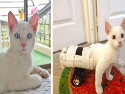 La storia di Angel: un gattino con grave malformazione salvato dalla strada