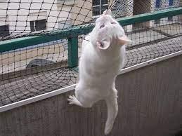 Firenze, appende il gatto al balcone di casa: denunciato